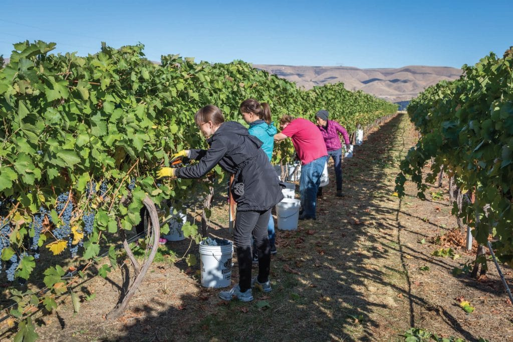 clearwater-canyon-cellars-harvest