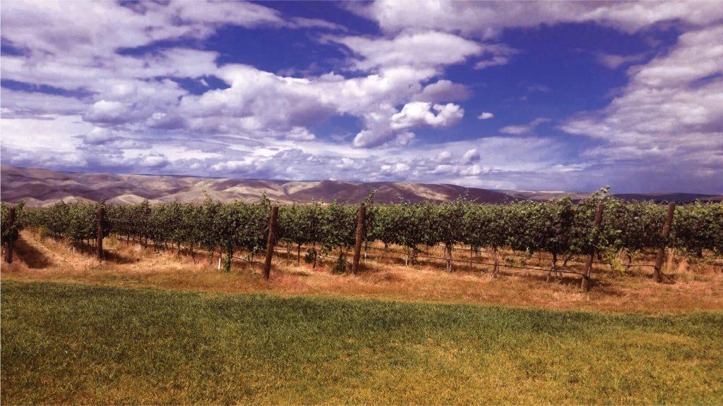 clearwater-canyon-cellars-vineyard