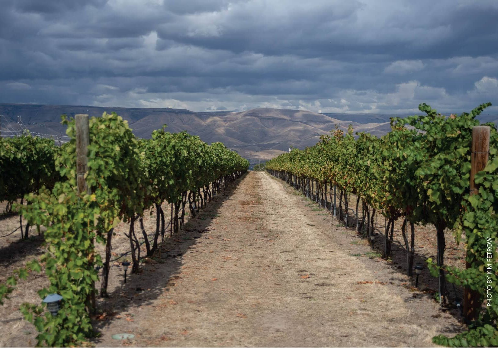 clearwater-canyon-cellars-kim-fetrow-21