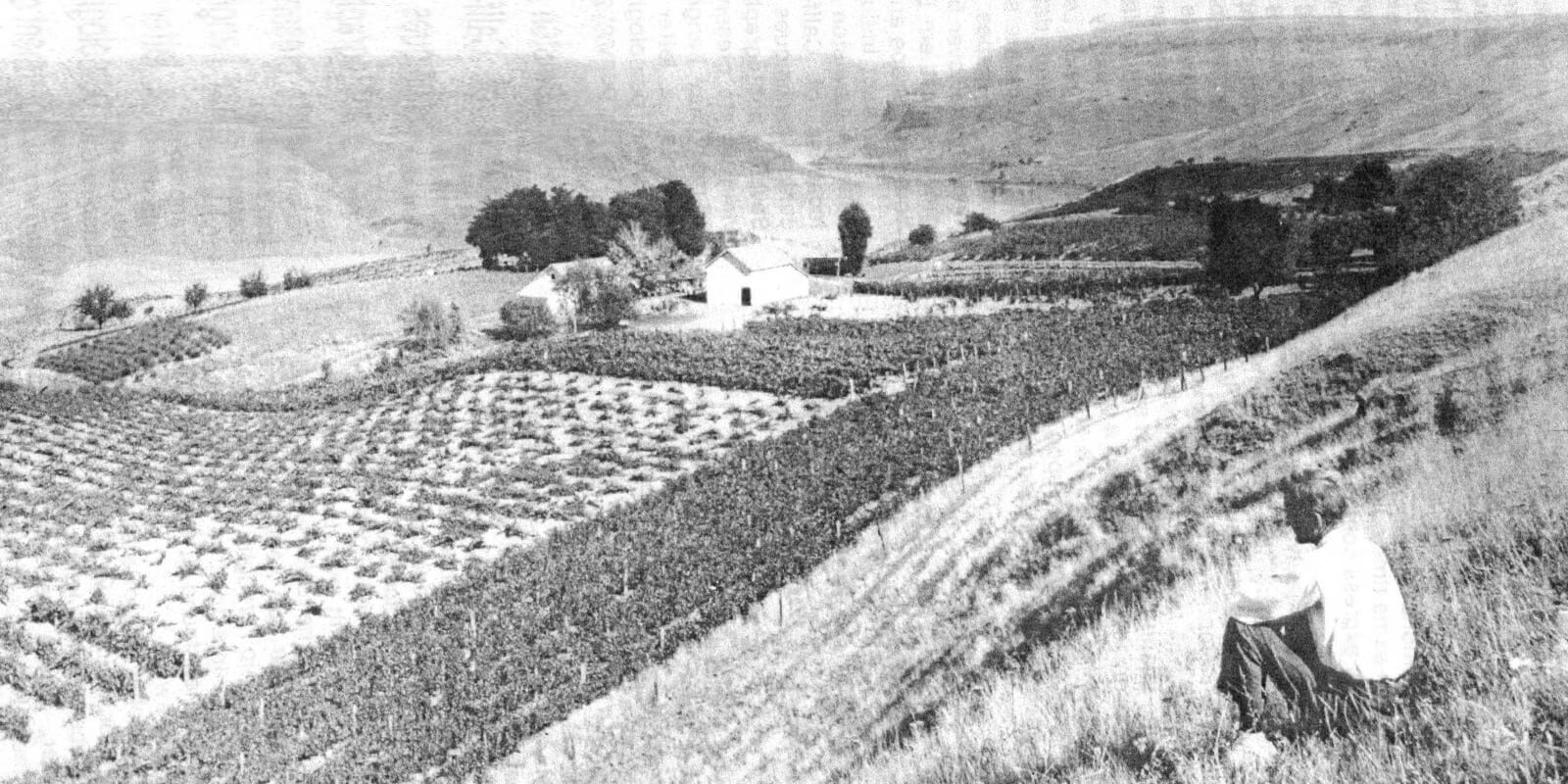 (Robert Schleicher, looking across his Lewiston vineyard in 1909. A year later Nez Perce County was voted dry, a full 10 years before national prohibition swept across America.